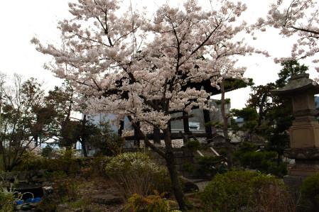 #003 鐘撞堂と桜 [GRD]
