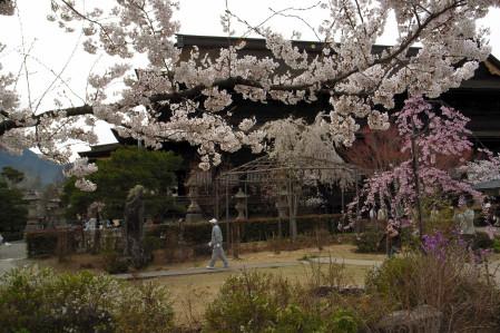 #004 善光寺と桜 [GRD]