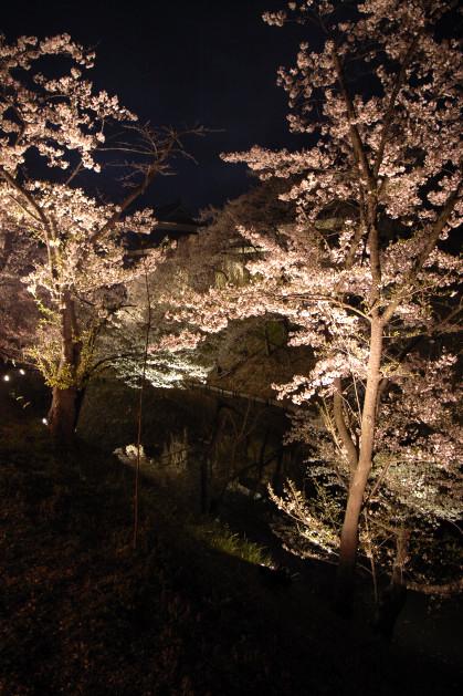 #004 お堀の周りに咲く桜