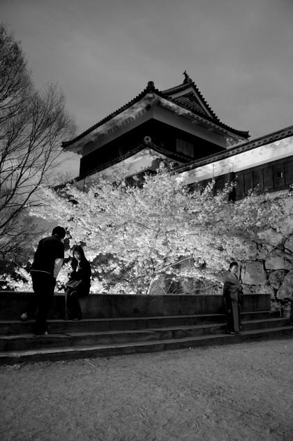 #004 桜と一緒に撮影