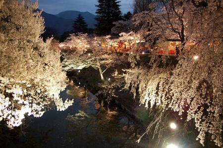 #001 お堀と桜