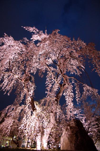 #001 枝垂れ桜