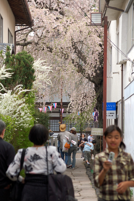 #002 桜の道の奥には