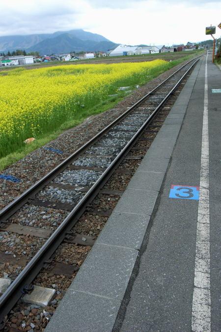 #003 駅前は黄色の畑