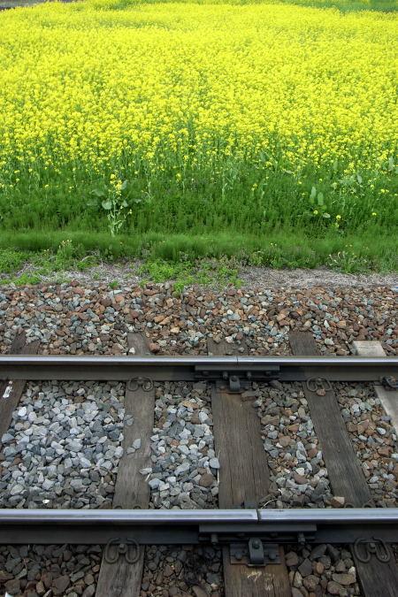 #004 線路と菜の花畑