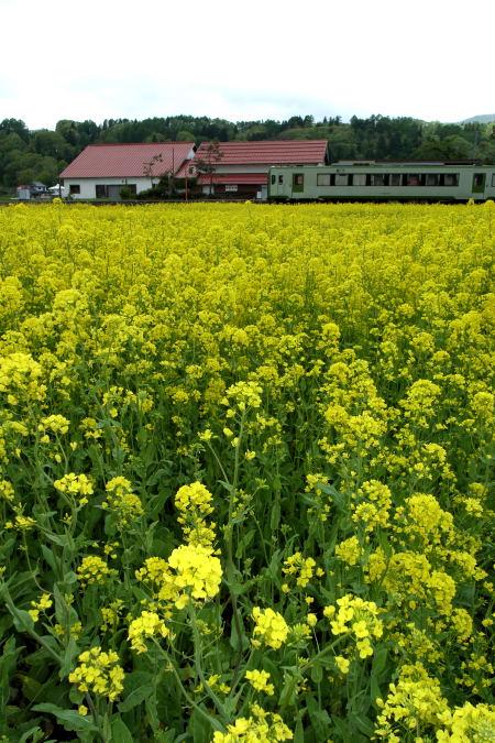 #005 菜の花と電車と駅と