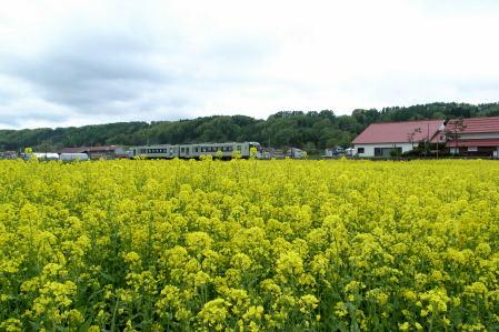 #006 菜の花と電車と駅と