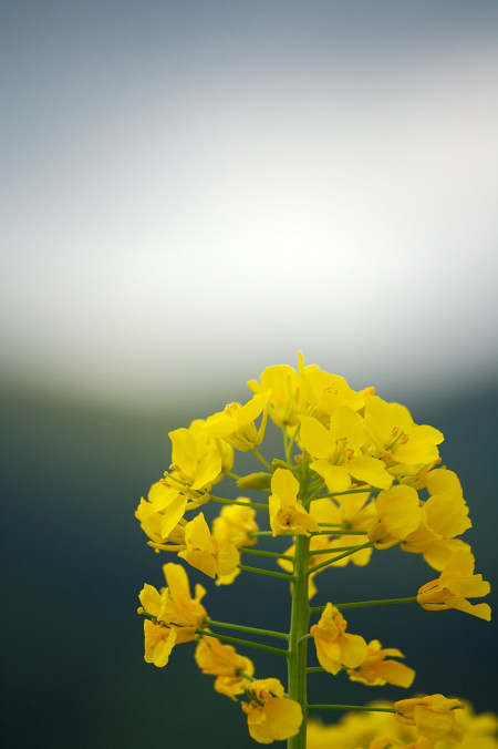 #001 黒と黄