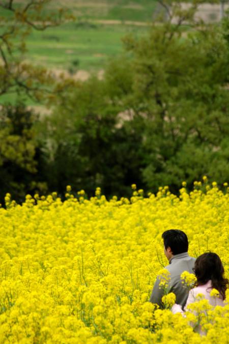 #002 菜の花畑の散歩