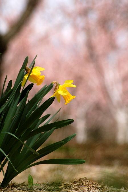 #002 黄色い花