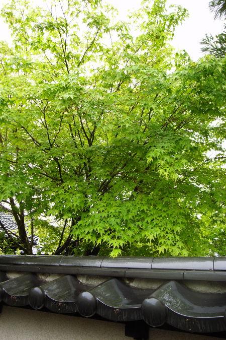 #001 塀の裏に広がる緑