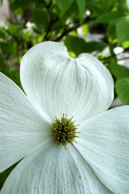 #003 白い花