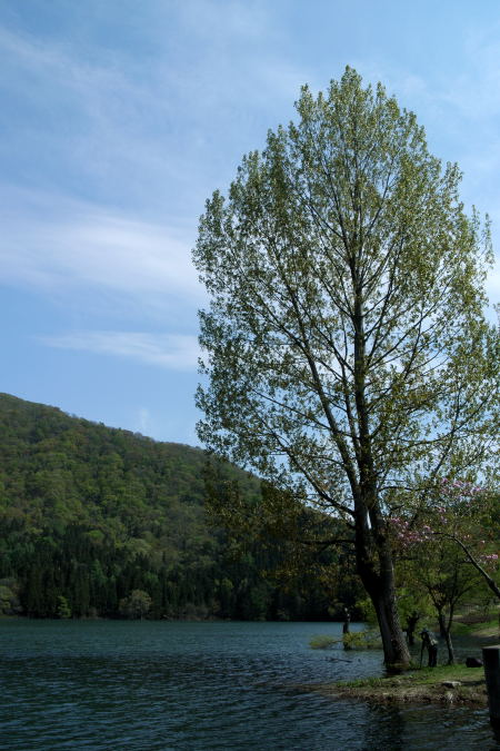 #002 湖の大きな木