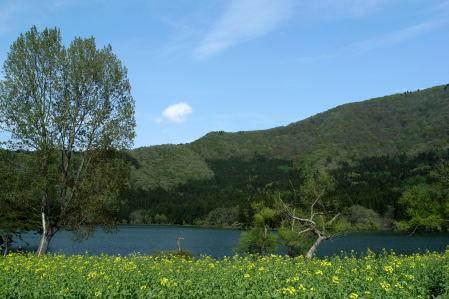 #003 菜の花と湖