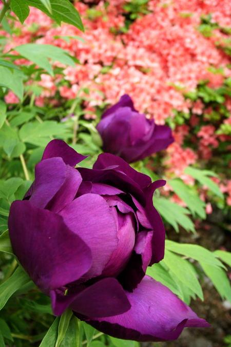 #003 紫