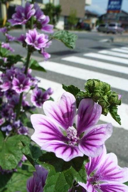 #004 紫の花