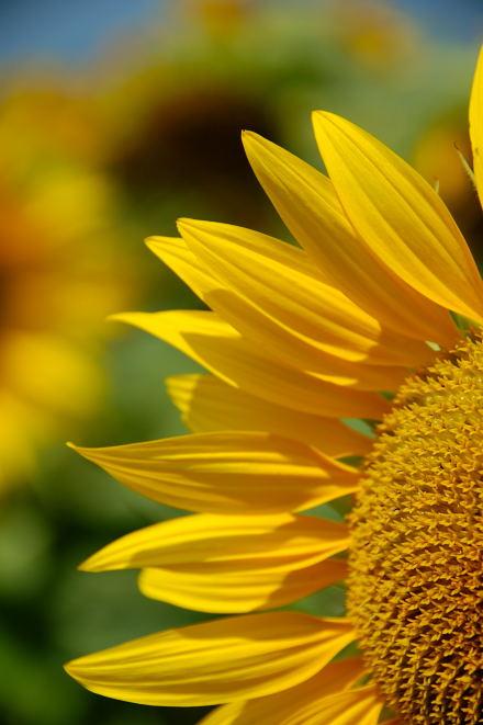 #001 夏の花