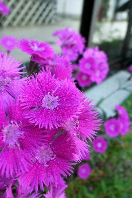 #002 桃紫花