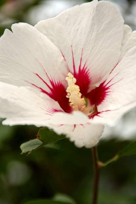 #005 WHITE FLOWER