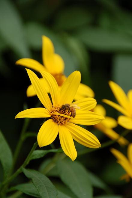 #002 黄と蜂