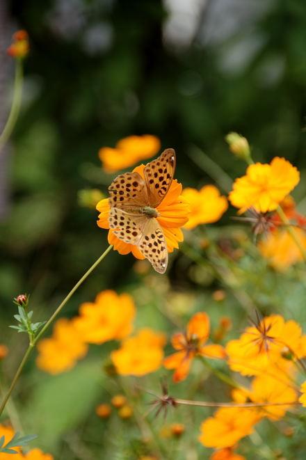 #003 橙と蝶蝶