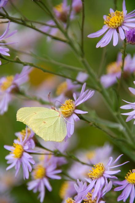 #004 白と蝶蝶
