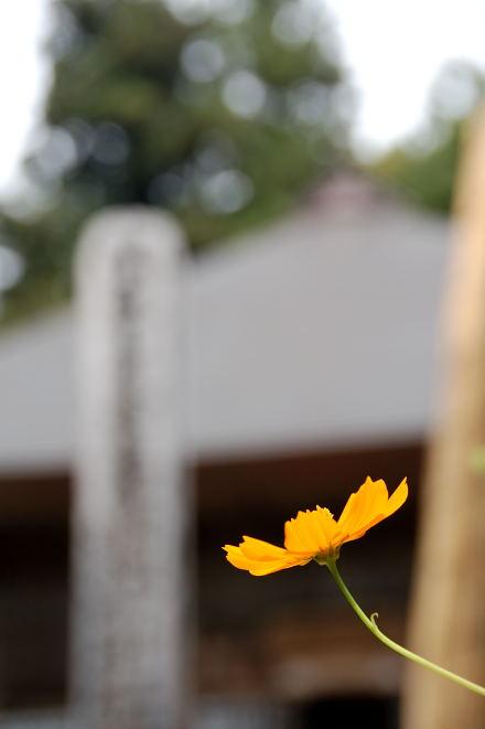 #001 花