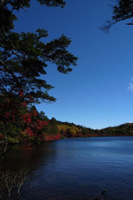 #002 白駒池の紅葉