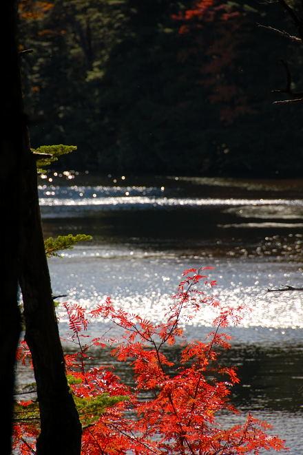 #001 水辺と紅