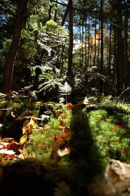 #002 苔の世界 その一