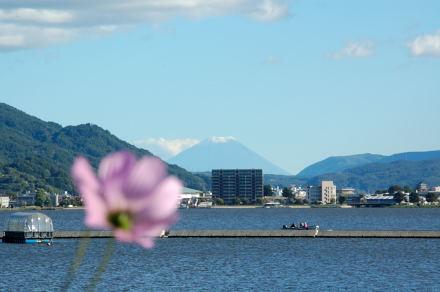 #002 富士とコスモス