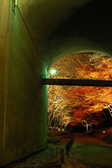 #001 橋の下からの紅葉