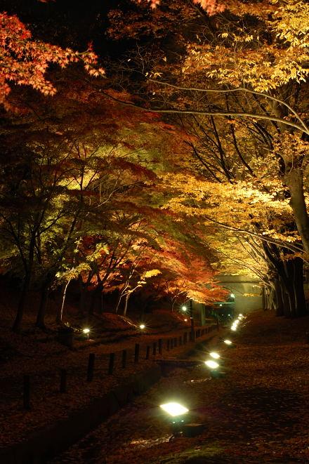 #002 並木のライトアップ