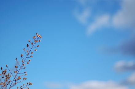 #003 青い空を見上げて