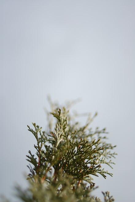 #004 雲と緑の木