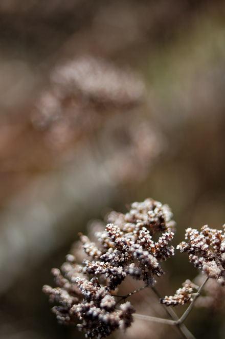 #005 霜が降りたような草の色