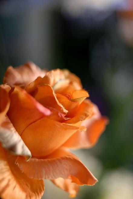 #003 薔薇