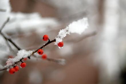 #004 小さな赤い実