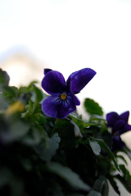 #002  冬に咲く花
