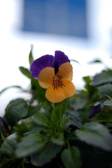 #003 冬に咲く花