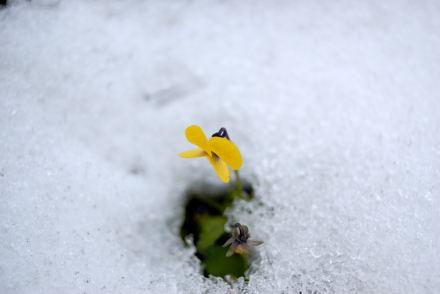 #004 冬に咲く花