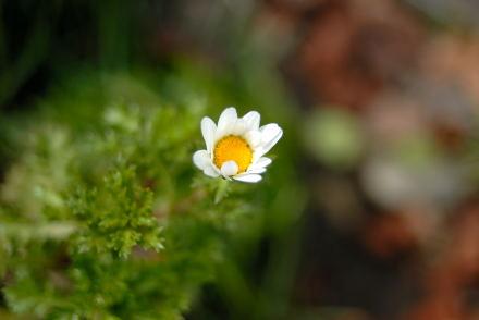#005 冬に咲く花