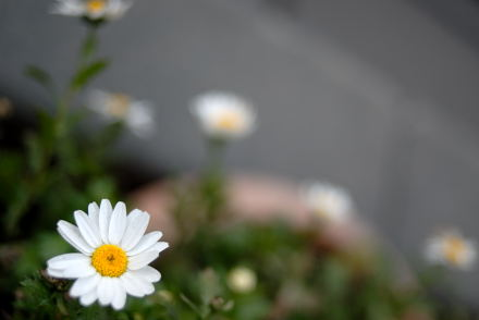 #006 冬に咲く花