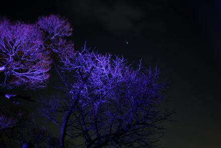 #001 紫色に染まる木々