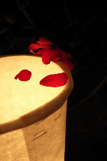 #003 明かりと花びら