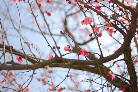 #002 春の訪れ