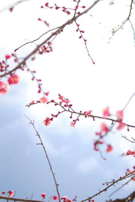 #003 梅と空