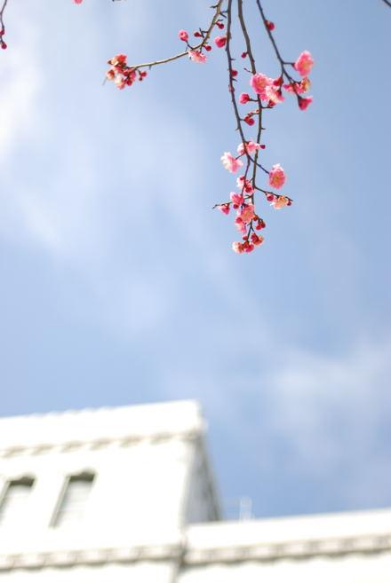 #004 梅と空