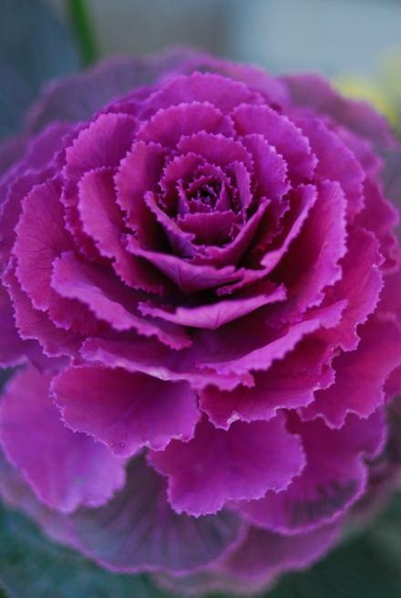 #003 花が咲き