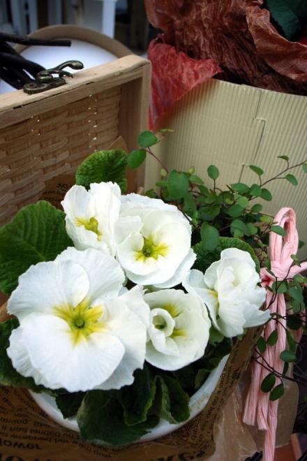 #003 街の花々